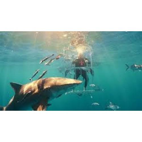 Đập hộp Samsung S8 cùng cá mập